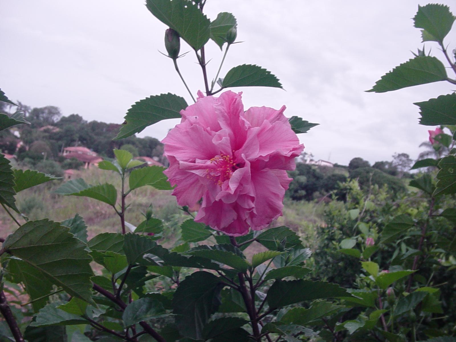 se fortifique de maneira a suportar o longo período de floração