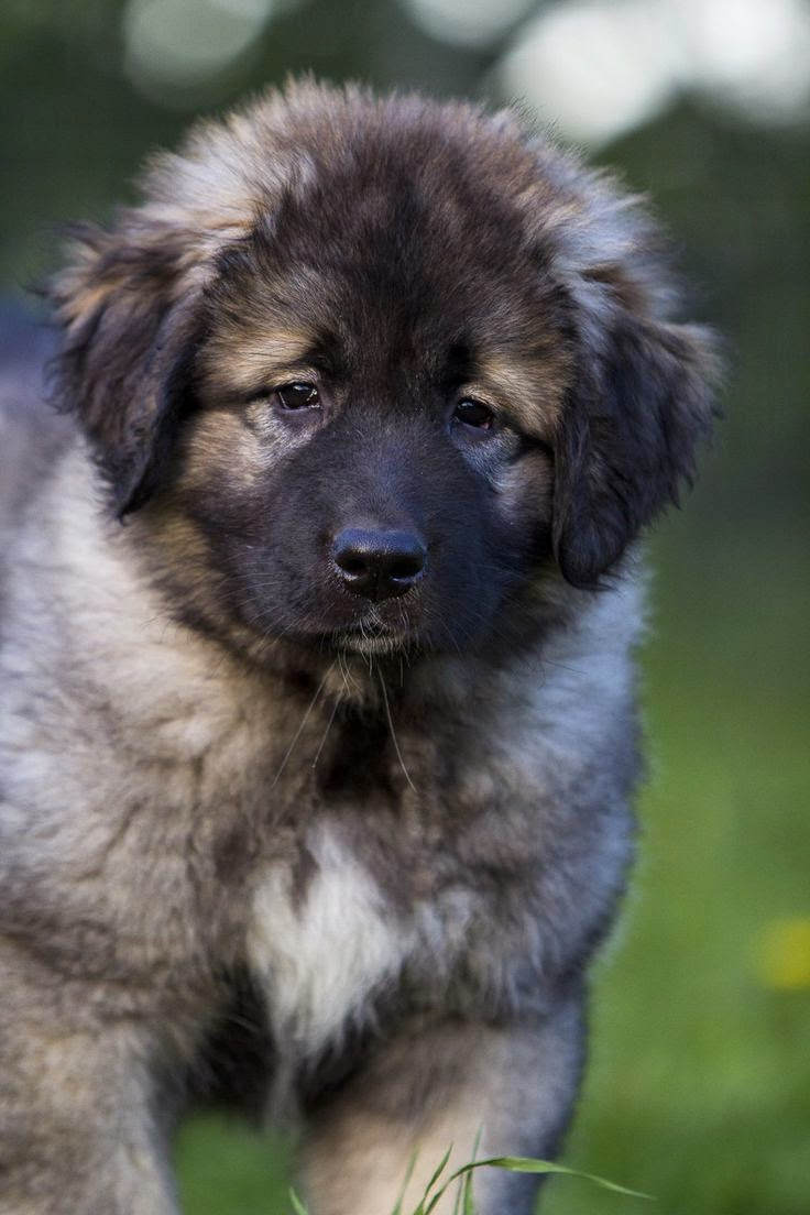 Top 05 Awesome Dog Breeds