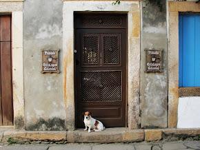 Os cachorrinhos de Paraty