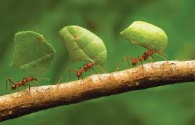 Semut Yang Membawa Makanan