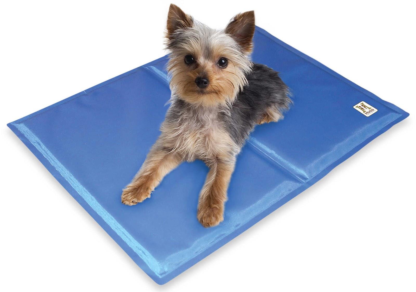 cool summer accessories for your dog australian dog lover. Black Bedroom Furniture Sets. Home Design Ideas