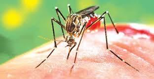 Dengue: causas, sintomas e tratamento