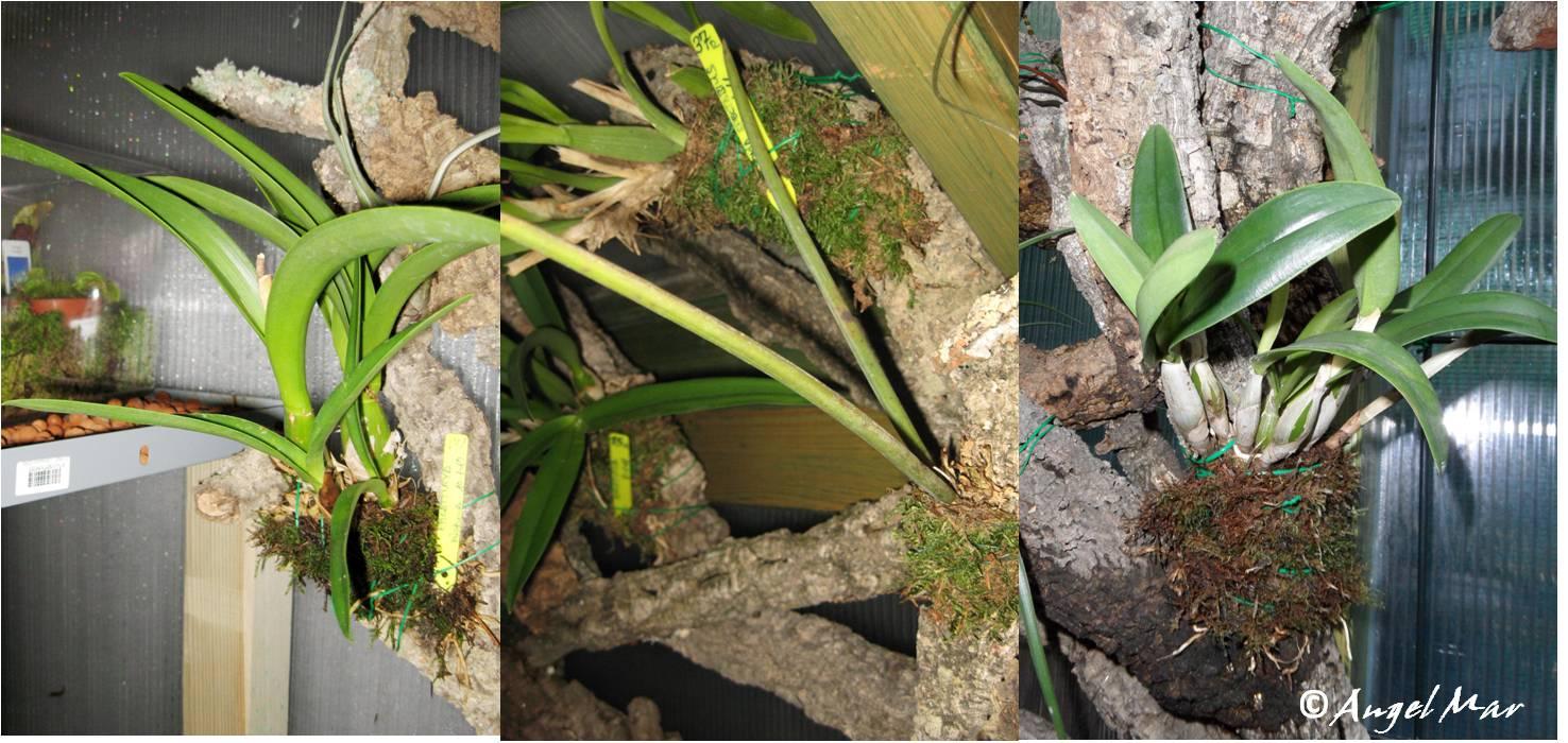 Orqu deas blog de angel mar d nde colocar las orqu deas - Como cuidar orquideas en maceta ...