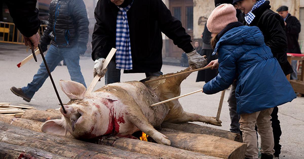 Finalizar la matanza y explotación de cerdos, con prisión y multas a quienes no cumplan