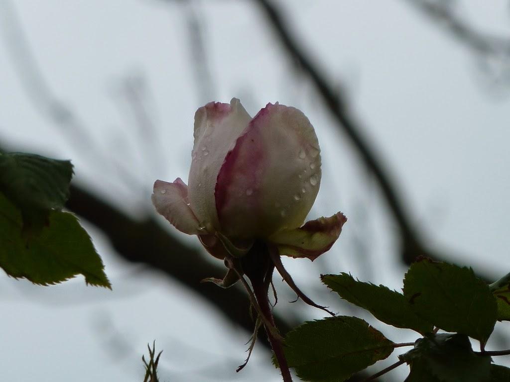 In m jn tuin tuinfoto 39 s mei 2014 - Bijzonder tuinfoto ...