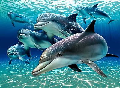 Golfinhos poliglotas