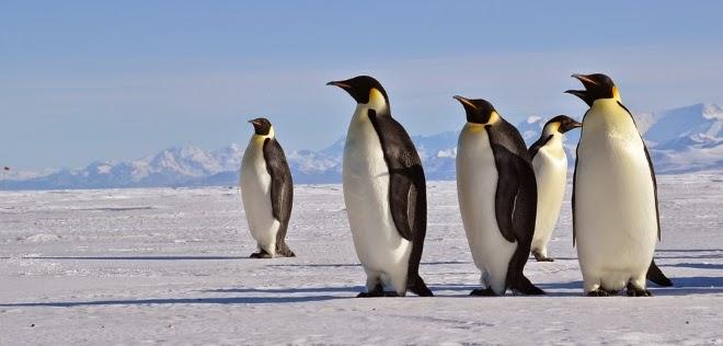 El Brexit, las Malvinas y su millón de pingüinos
