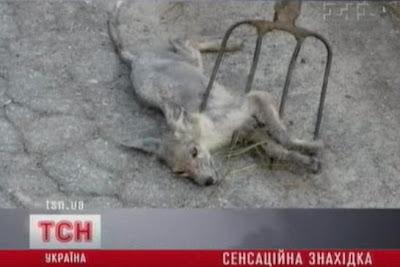 matan al chupacabras setiembre 2012
