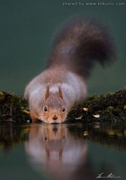 http://2.bp.blogspot.com/-Lj1ioKh98tY/TXWAqjBcCzI/AAAAAAAAQKc/cAoVODMEjTQ/s1600/these_funny_animals_632_640_05.jpg