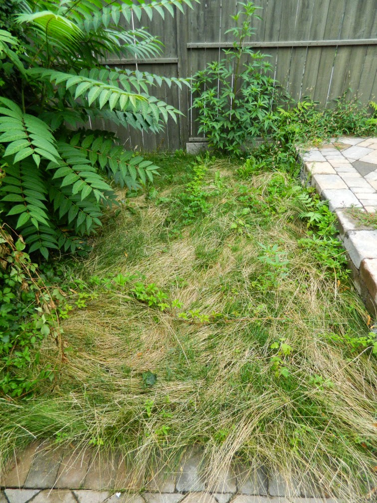 New garden renovation Leslieville before by Paul Jung Gardening Services Toronto