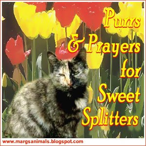 Purrs for Splitter