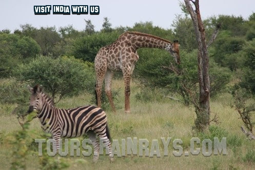 tour guide india | wildlife holidays india | best family travel destinations
