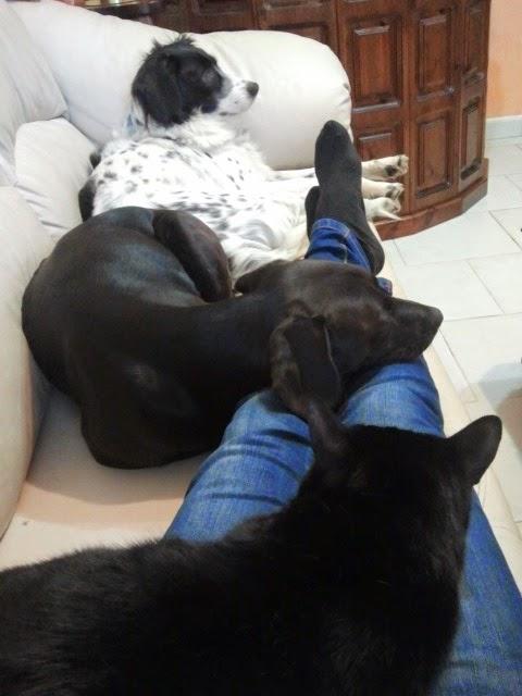 Cani e gatti che convivono pacificamente