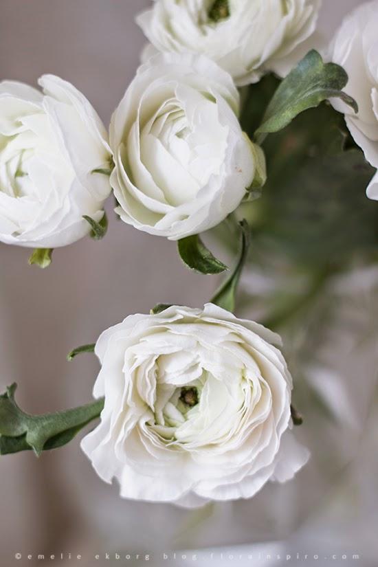 ranunculus, ranunkler i rund vas, rund vas hemtex, vas hemtex, round glass vase, white ranunculus, vita ranunkler,