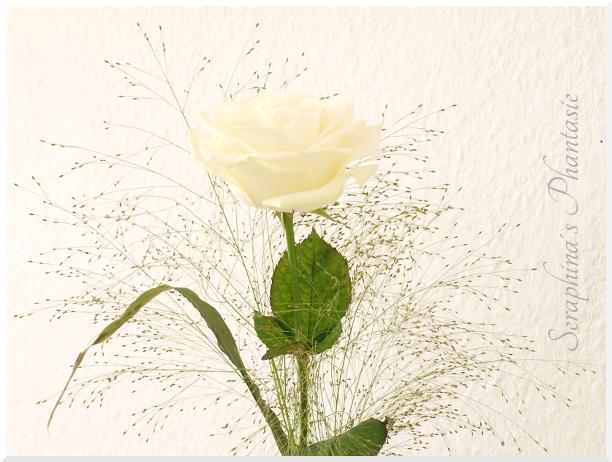 seraphina s phantasie eine wei e rose in einer gr nen vase. Black Bedroom Furniture Sets. Home Design Ideas