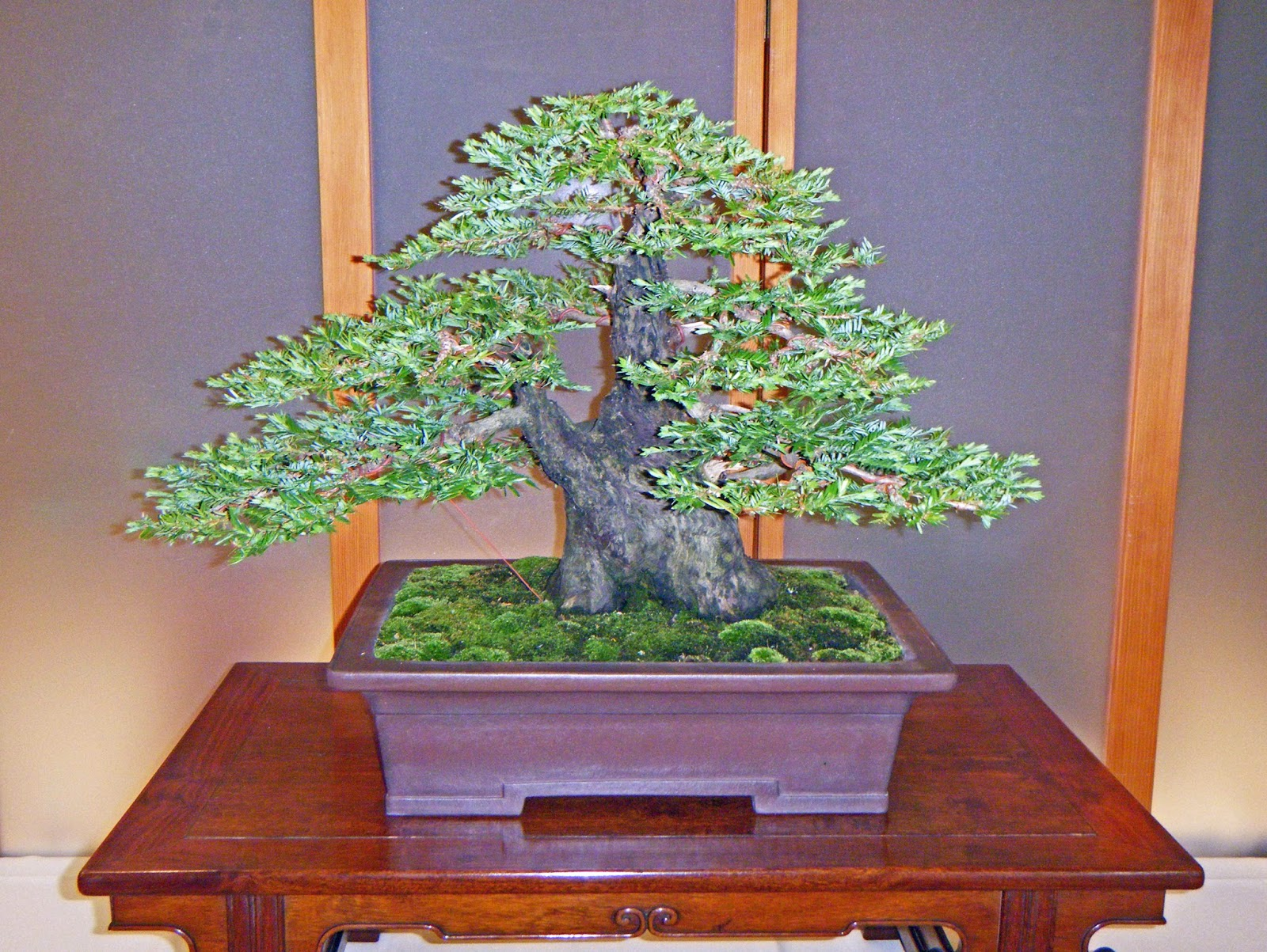 Bonsai In Hoosierland Mid America Bonsai Show 2014 Part 1 Bests