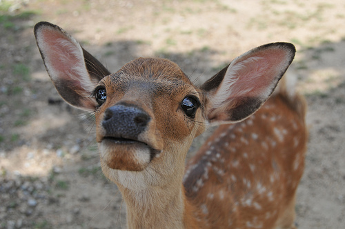 Funny Deer Photos