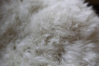 washing sheepskin rug cat urine