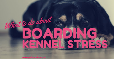 Boarding Kennel Stress