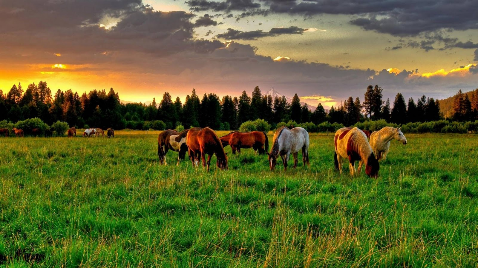 http://2.bp.blogspot.com/-Ll-ctOT1tV8/Tu7TeMlqanI/AAAAAAAAF7A/G-lDmznQmEo/s1600/horses-in-green-field-hd-wallpaper.jpg