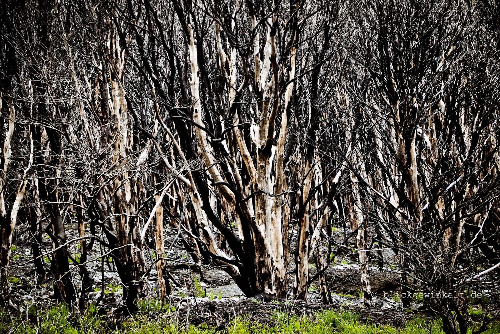 Überreste des großen Feuers im Torres del Paine