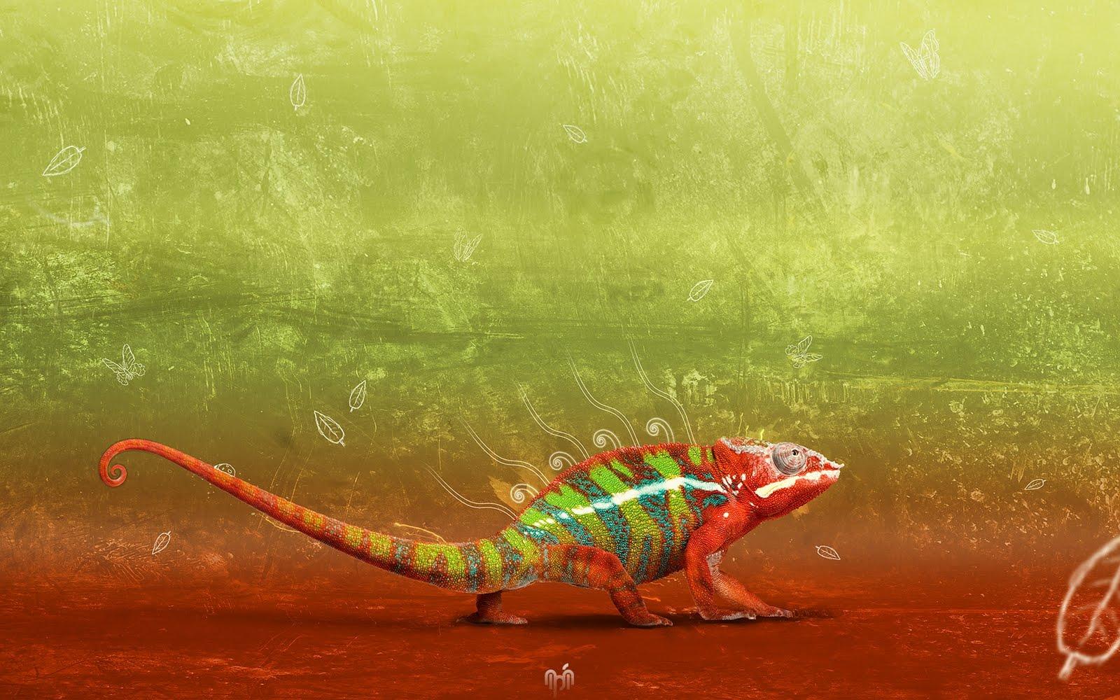 http://2.bp.blogspot.com/-Ll3mEbKJLM0/TlMkKQNVjoI/AAAAAAAAARM/jBHPwXqXwko/s1600/Chameleon+1680x1050+HD+Wallpaper.jpg