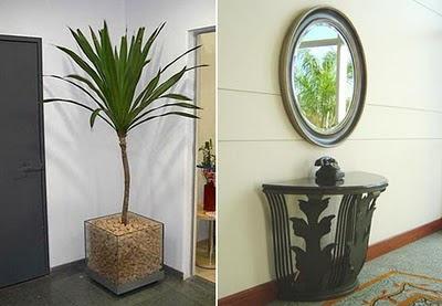 Decoração Feng Shui, plantas