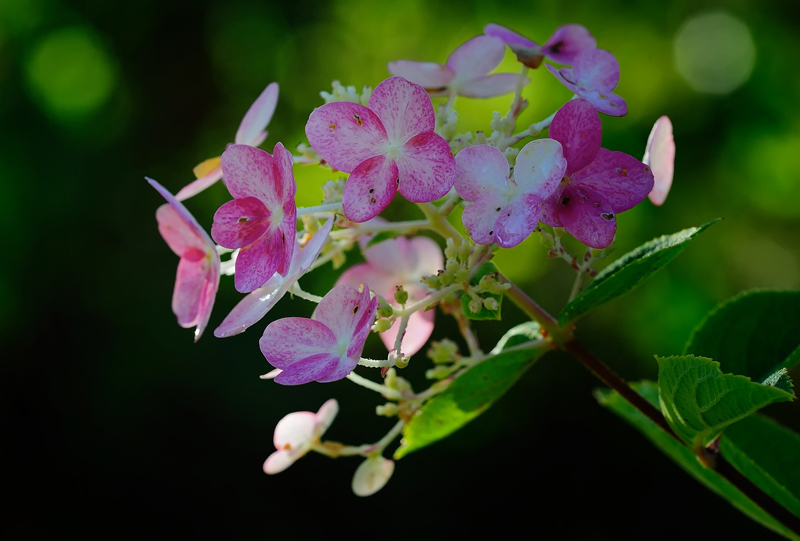 rosa utflod etter samleie vakre