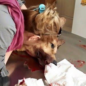 کشته شدن سگ بیگناه در برابر صاحبش با شلیک مامور پاسگاه کوهسار