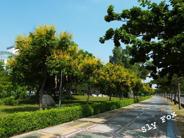 五期重劃區台灣欒樹