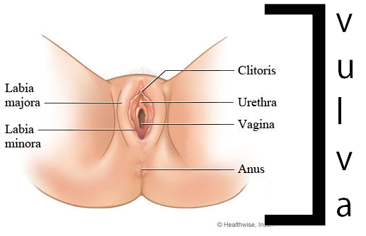 descripiton of vagina