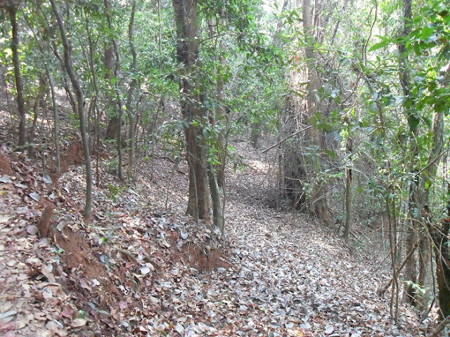 джунгли в сухой сезон