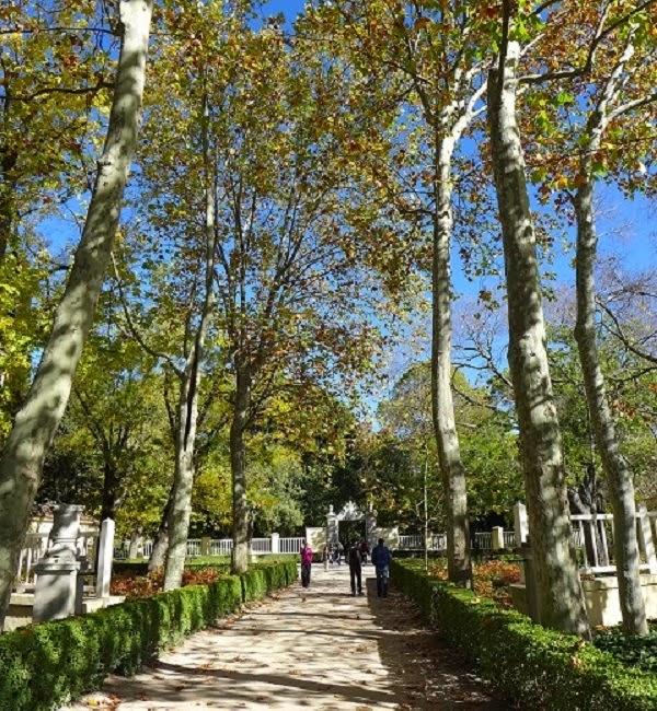 Paseo entre árboles