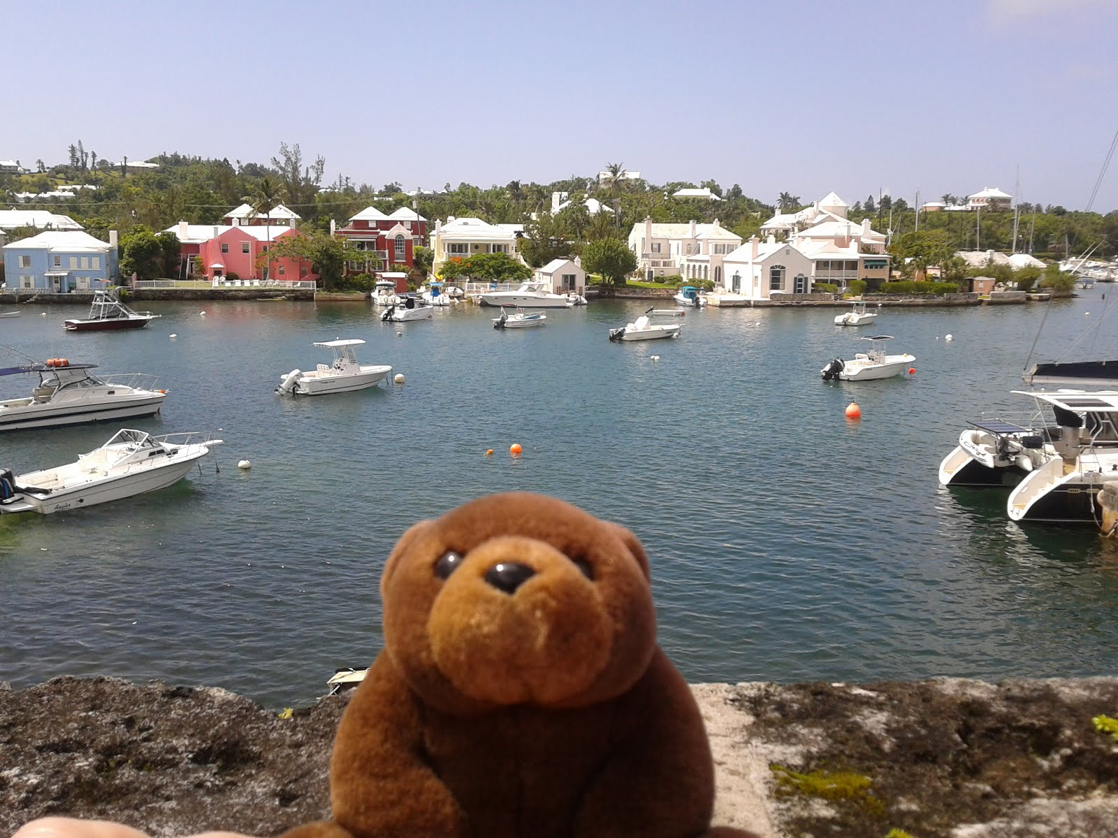 Teddy Bear in Bermuda