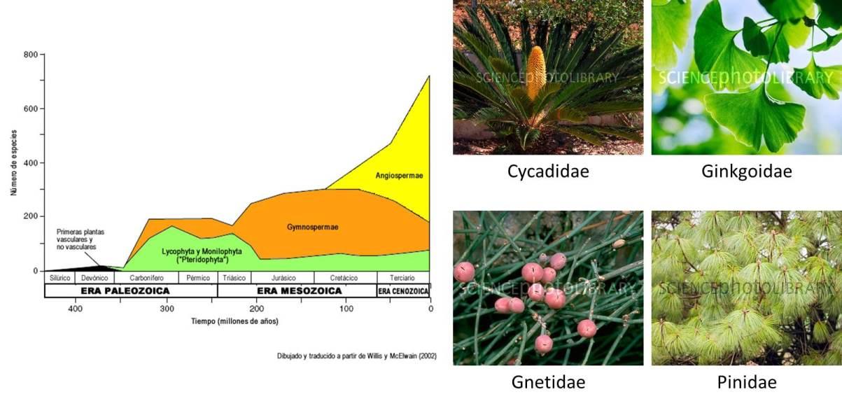 grupos de plantas vasculares: