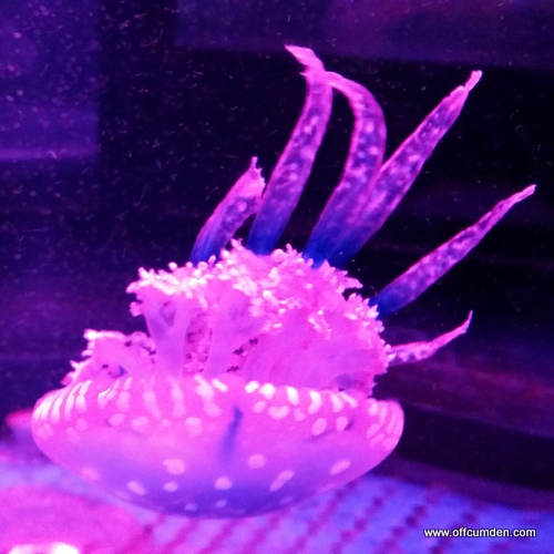 Jellyfish tentacles