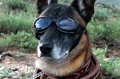Steam Punk Pup!
