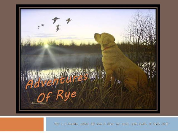 Adventures of Rye: Dog Food & Treats