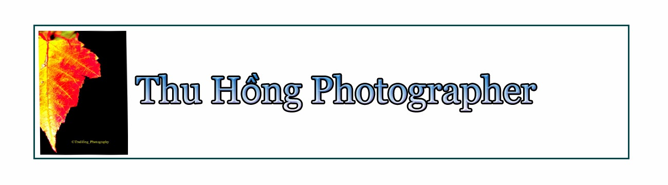 Thu Hồng Photographer