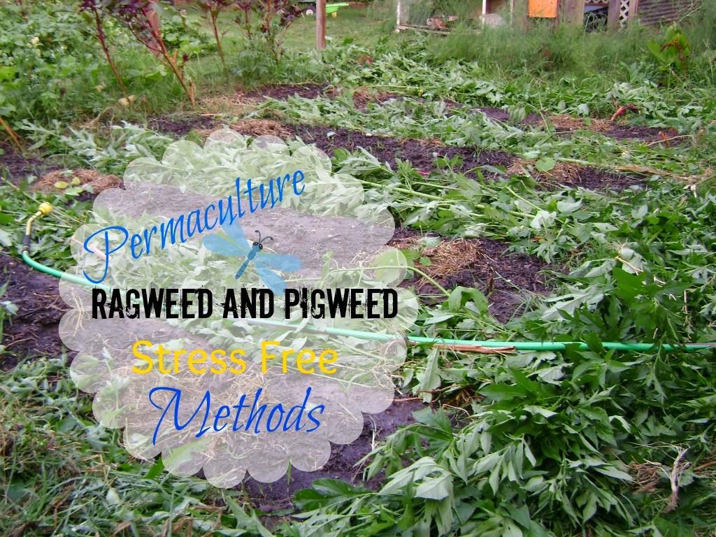 Permaculture Gardening Methods Garden Ftempo
