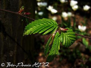 http://hpz-fotografie.blogspot.ch/p/blumen.html
