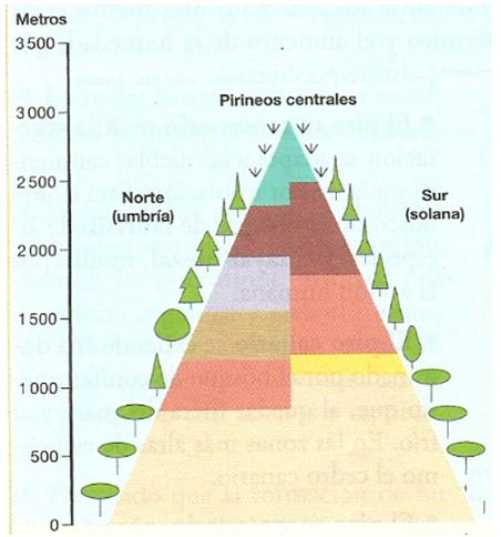 Funcion de la vegetacion
