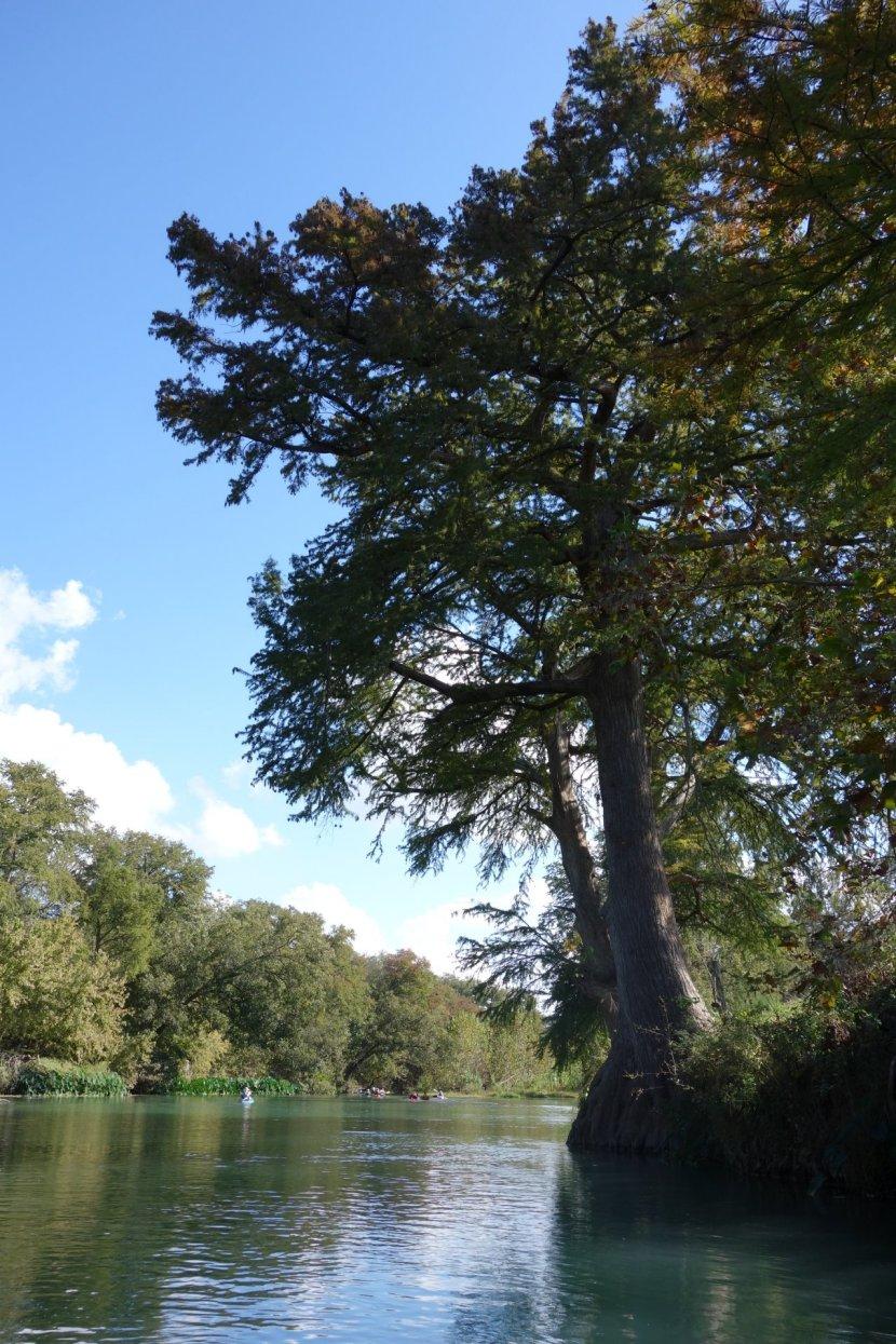 boatsandballs: Saturday Paddlers - San Marcos River