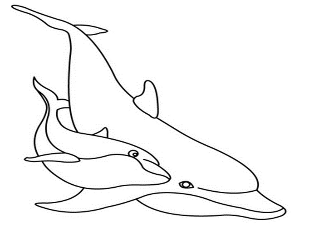 Image Result For Bottlenose Coloring Book