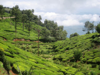 Ooty attraction