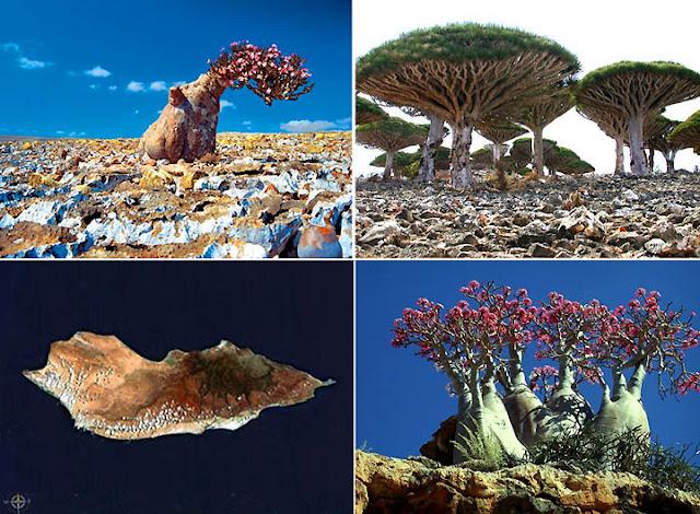 أجمل و أغرب جزيرة طبيعية في العالم جزيرة سقطرى اليمنية ثقف نفسك