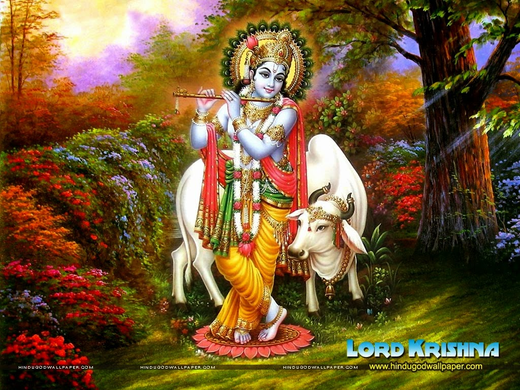 Download Wallpaper High Resolution Lord Krishna - 1272_krishna-cow-wallpaper-03  You Should Have_607051.jpg