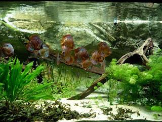 el-agua-del-acuario-cambios-blog-tutorial-pecera