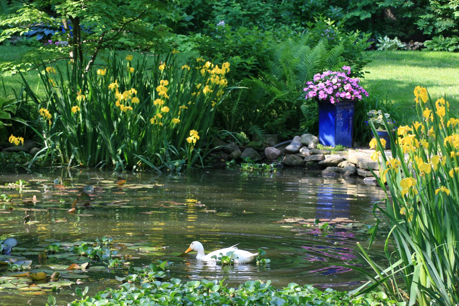 The skillful bee favorite pond plants and features zone 5 6 for Pond with plants