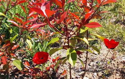 kırmızı çiçekli park